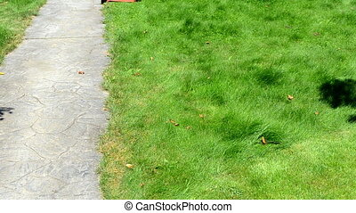worker cut grass - gardener male man with shorts and...