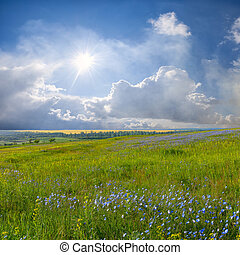 Blue flower meadow and clouds - Summer landscape with blue...