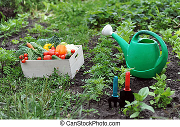 Kitchen-garden - An image of a box with vegetables and a...