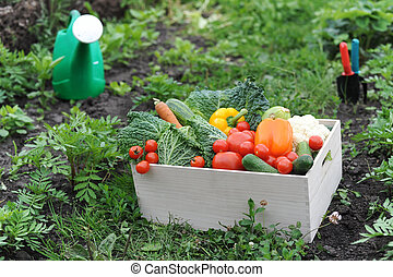 Vegetables in the box