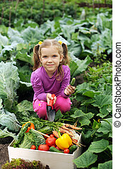 In the kitchen-garden - A girl with a box of vegetables in...