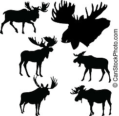 mooses - moose silhouette collection vector illustration