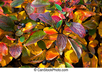 autumn leaves - background from multi-colored beautiful...