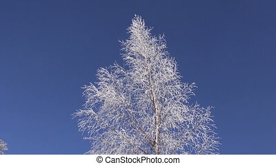 beautiful hoarfrost on birch tree and blue sky
