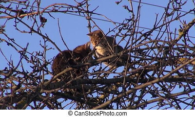 two cats on apple tree