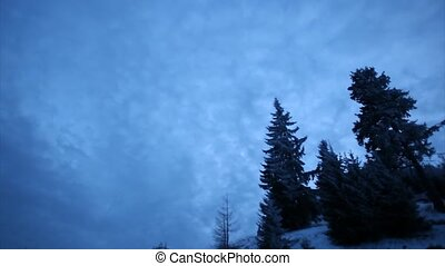 Winter sky timelapse with fir trees
