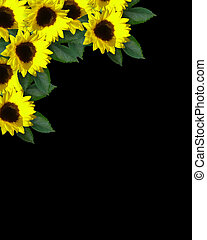 Sunflowers corner Invitation - Illustration and image...