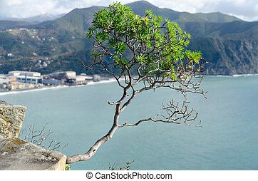tree on the sea - tree on the rocks of Sestri Levante