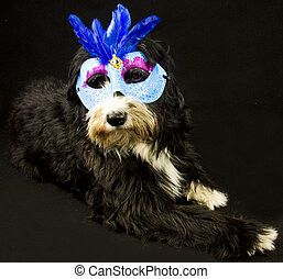 carnival dog - a dog and carnival mask