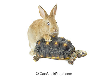 bunny and turtle - Close-up image of a cute bunny and turtle...