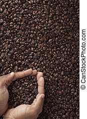 coffee beans in cupped human hands