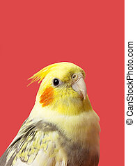 cropped image of a yellow parrot - Macro shot of a yellow...