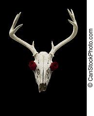 バラ, 鹿, 頭骨