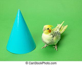 northern cardinal bird - Northern cardinal bird with a cone...