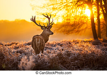 Red Deer in Morning Sun - Beautiful forest landscape with...