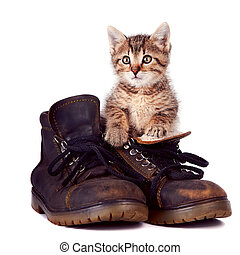 Kitten and boots on a white background