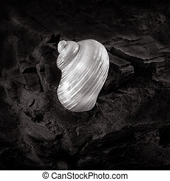 shell on a rock