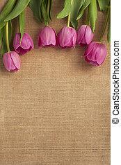 743 close up shot of pink tulip - Detailed shot of pink...
