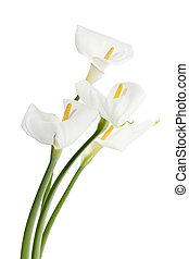 bunch of white flowers - Close-up shot of white lilies in a...