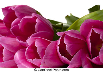 cropped image of pink flowers - Close-up cropped shot of...