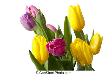 cropped shot of yellow and pink tulips - Cropped shot of...