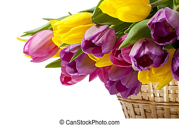 pink and yellow flowers - Pink and yellow flowers on a...