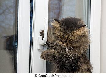 gato, Apertura, ventana