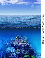 Blue Ocean - Corals in deep sea
