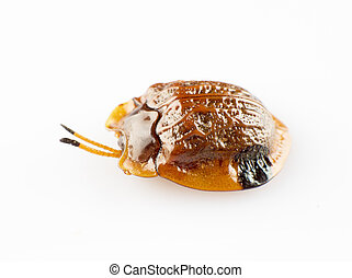Tortoise shell isolated on white background
