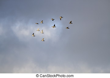 group of flying birds
