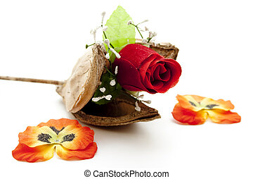 Rose with wooden branch