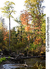 tiene, troncos, viejo, corriente, árboles, montón, recogido, río