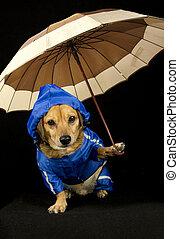 rain dog  - blue rain dog and umbrella