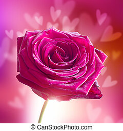 Valentine's Day Rose with Hearts