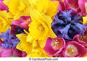 Spring Flowers - Daffodil, hyacynth and tulip spring flower...