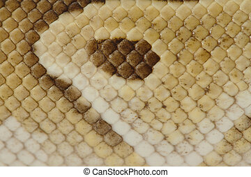 Snake skin for background