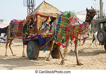 Decorated camel at pushkar camel mela holiday - Decorated...