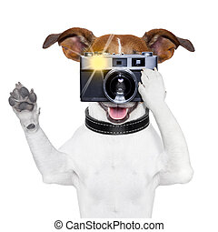 dog photo - dog taking a photo with an old camera and...