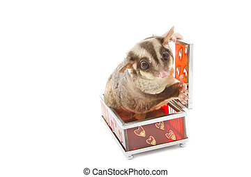 sugar glider in glass box,valentine theme