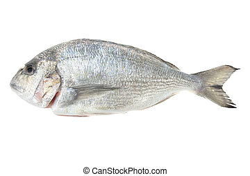 Dorada seafood isolated on white. Bream fish. - Dorada...