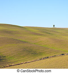 Tuscany, landscape. Rolling hills and a tree.