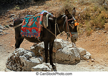 typical greek donkey with multicolor saddle standing in the...