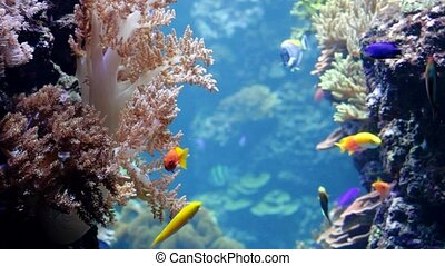Tropical fish and corals in the Berlin aquarium
