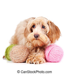 Decorative beige dog and woolen balls - Decorative dog Puppy...