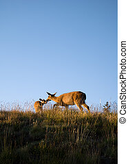 Mommy Deer - Deers roaming close to the visitor center atop...