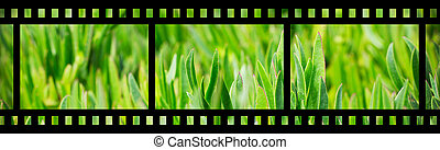 Green grass on the lawn