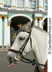 The horse at the gates of the Hermitage. St. Petersburg. Russia.