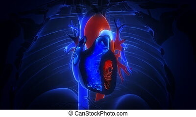 heart with blood action close up animation - heart with...