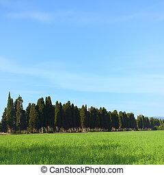 Bolgheri famous cypresses trees boulevard landscape Long...