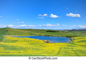 Tuscany, Crete Senesi landscape near Siena, Italy, europe. Small blue lake, green and yellow fields, blue sky with small clouds and a lonely pine tree on the left hill.